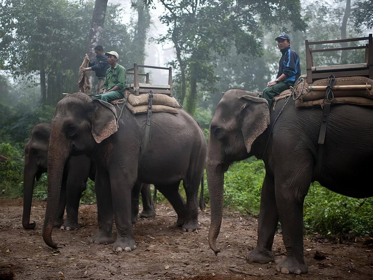 Parc National Chitwan, Népal