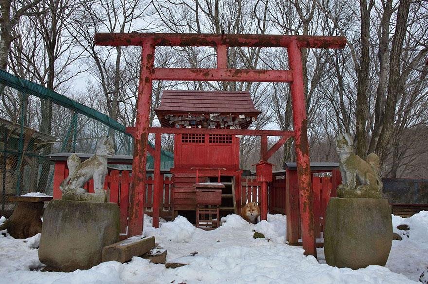 Zao Kitsune Mura, village renards Japon