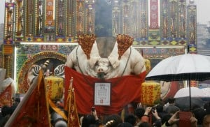Pigs of God, festival, Taiwan, énorme cochon