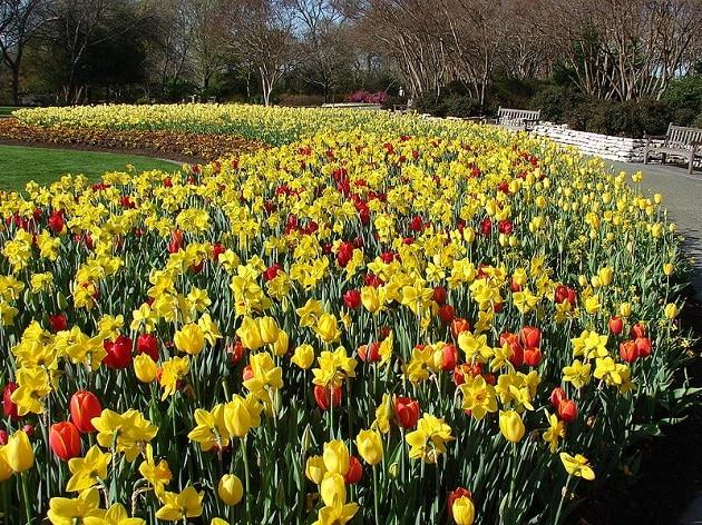 Jardin botanique, arboretum, Dallas