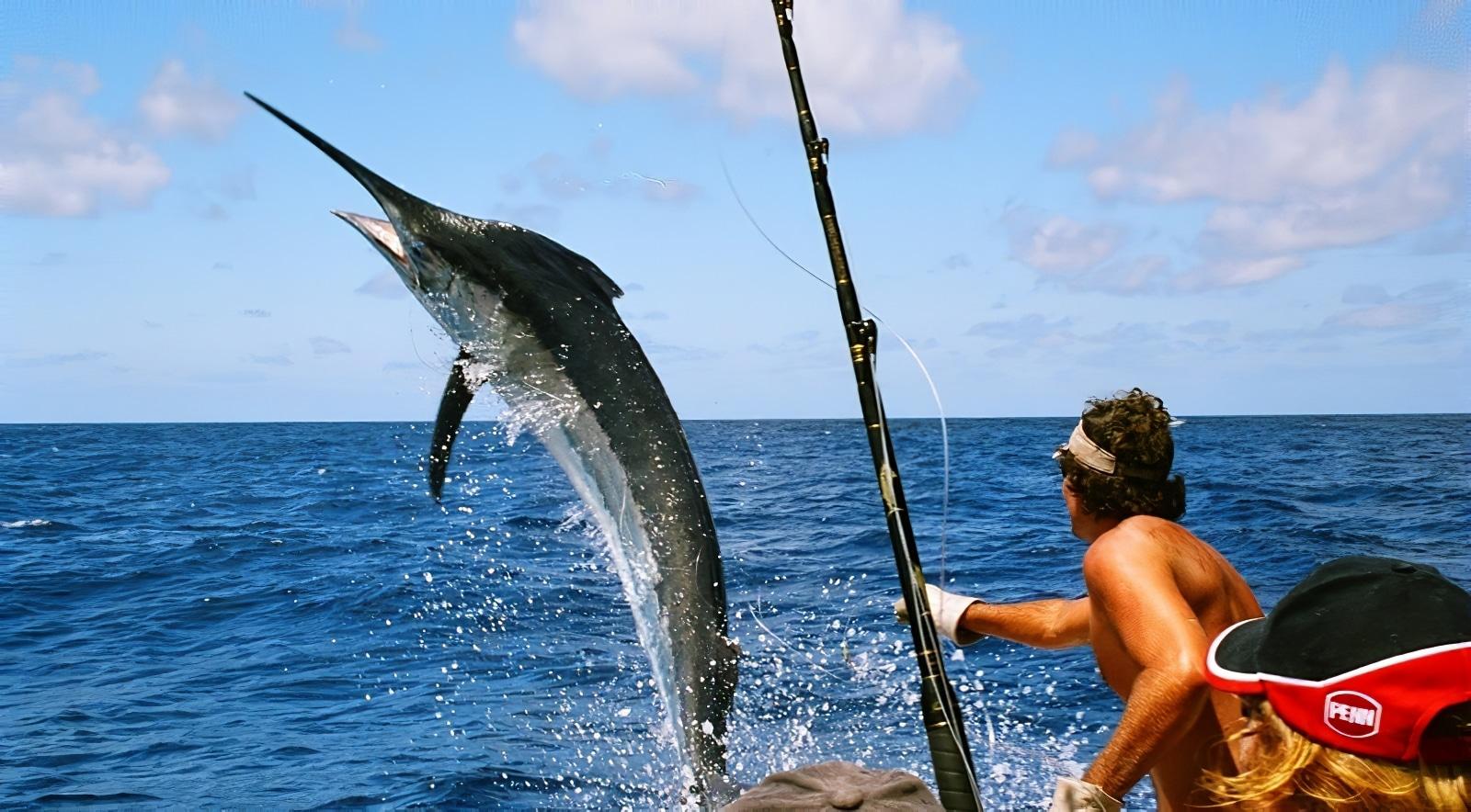 La vente des lignes pour la pêche à kitae