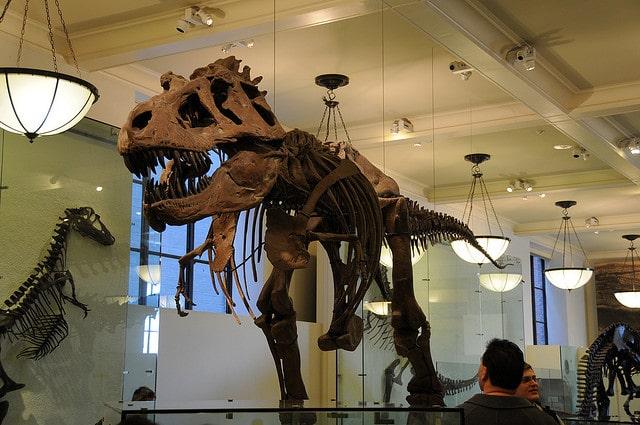 Squelette de dinosaure au Musée d'Histoire Naturelle de New York