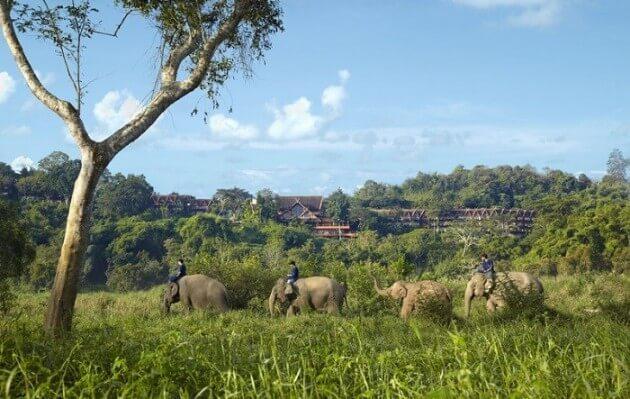 Une nuit avec les éléphants à l'Anantara Golden Triangle