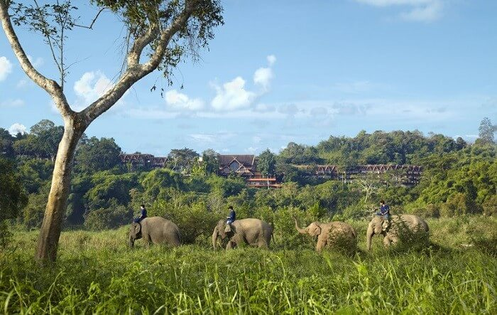 Anantara Golden Triangle, éléphants