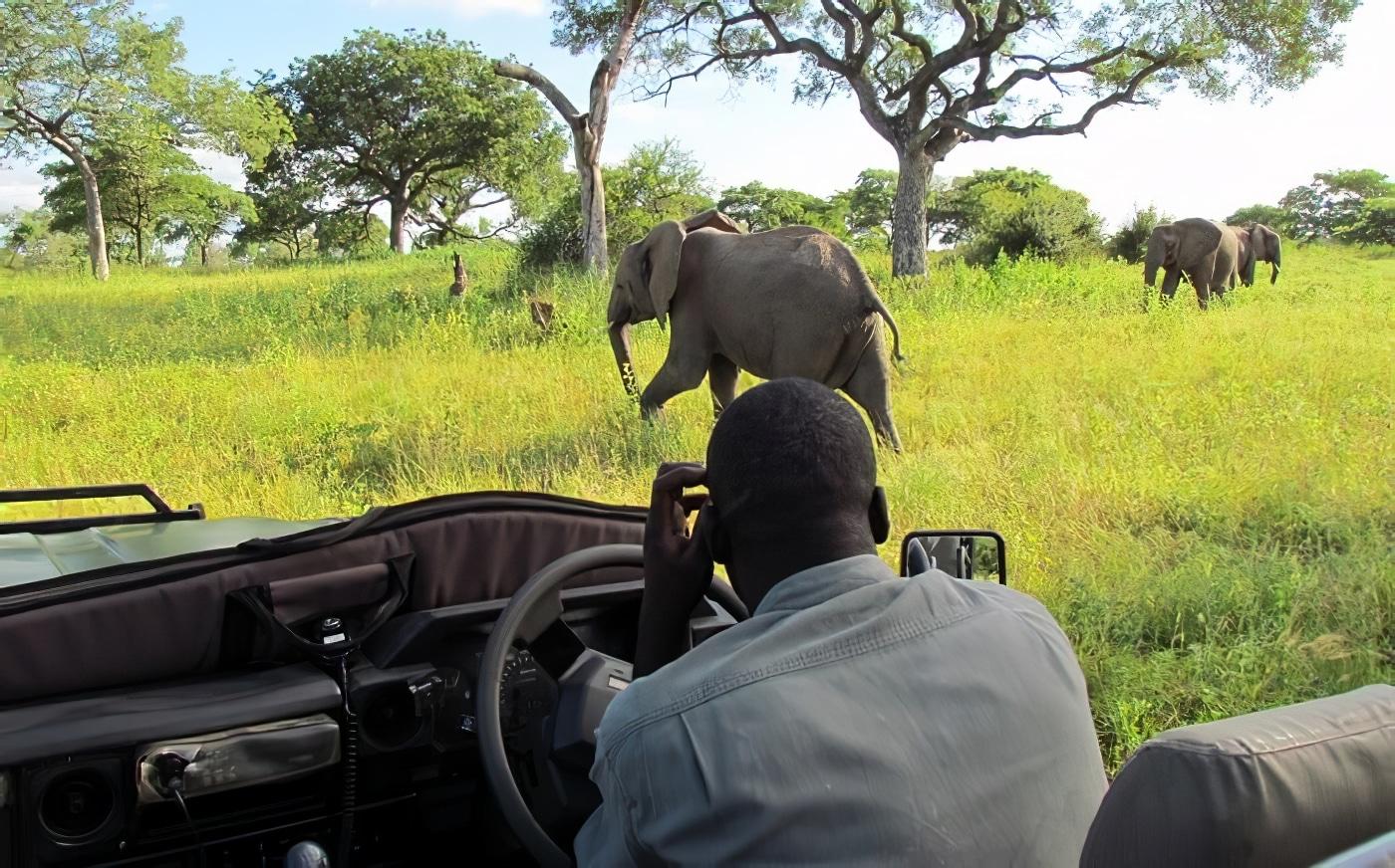 Visitez le Parc Kruger lors d'un safari de 3 jours depuis Johannesburg
