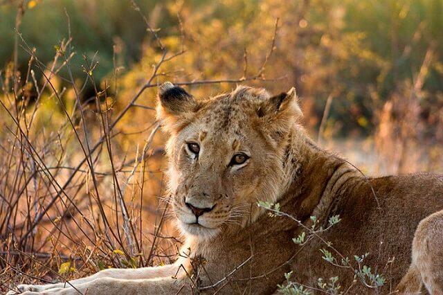 Safari au parc Kruger, Johannesburg