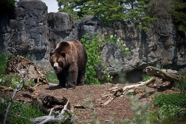 Zoo Seattle