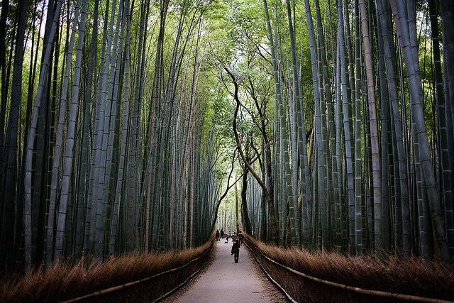 Arashiyama, forêt de bambous, Kyoto