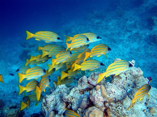 Barrière de corail, Maldives