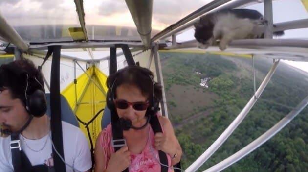 Un chat oublié sur l'aile d'un petit avion est sauvé par le pilote