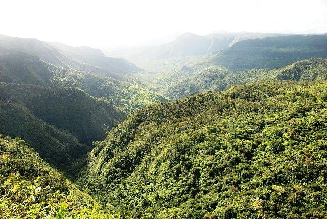 Forêt, île Maurice