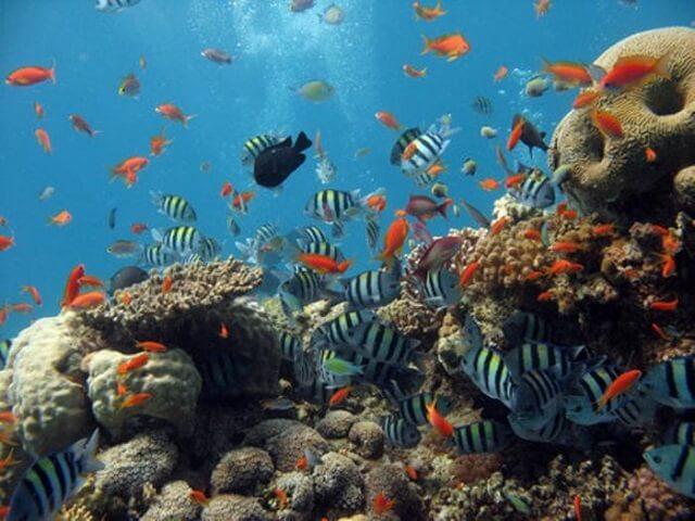 Ningaloo, marine park, Australie