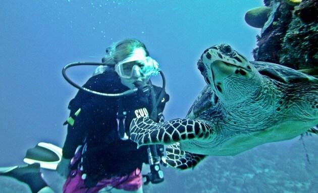 Top 5 des plus belles barrières de corail au monde