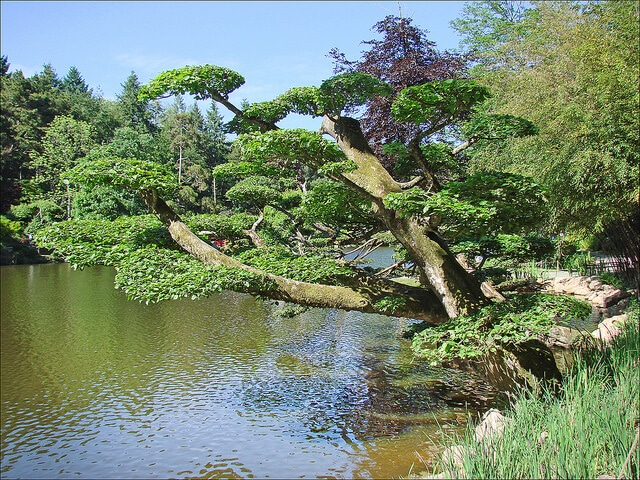 Parc japonais Maulévrier