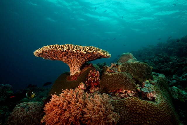 Récif de Tubbataha, Philippines