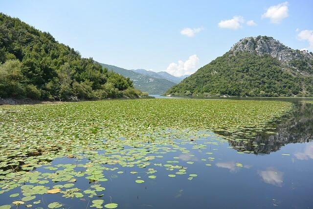 Lac Skadar, Shkodra, Monténégro