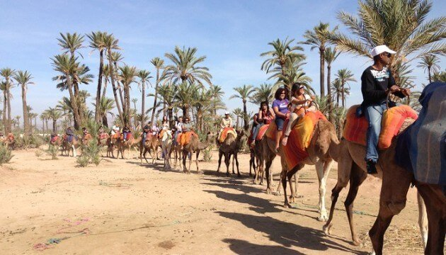 Balade en dromadaire dans les environs de Marrakech