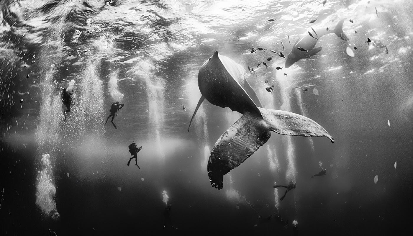 Les lauréats du National Geographic Traveler Photo Contest 2015