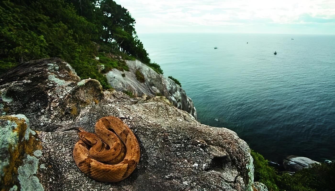 île de Queimada Grande, serpents