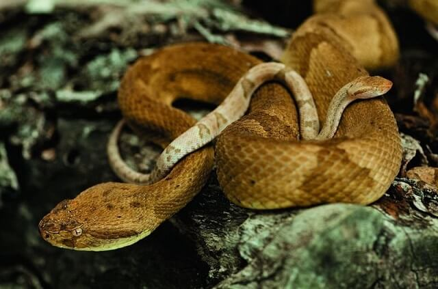 L Ile De Queimada Grande L Ile Aux Serpents