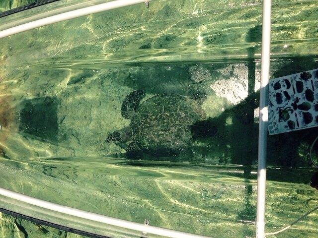 kayak transparente, Reunión