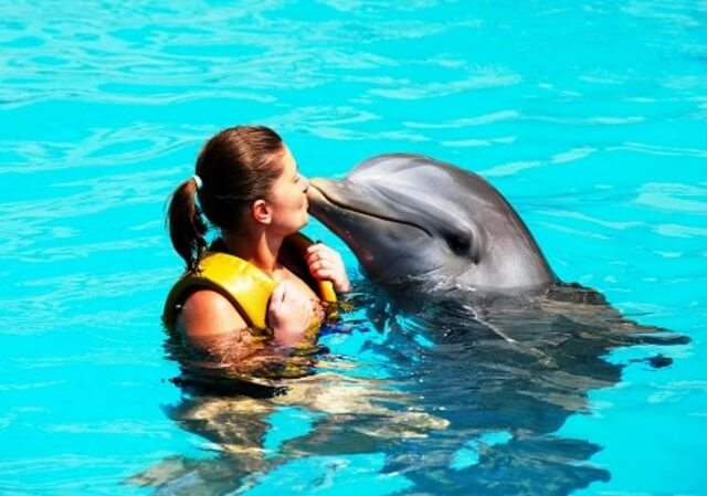nage avec dauphins Dubai