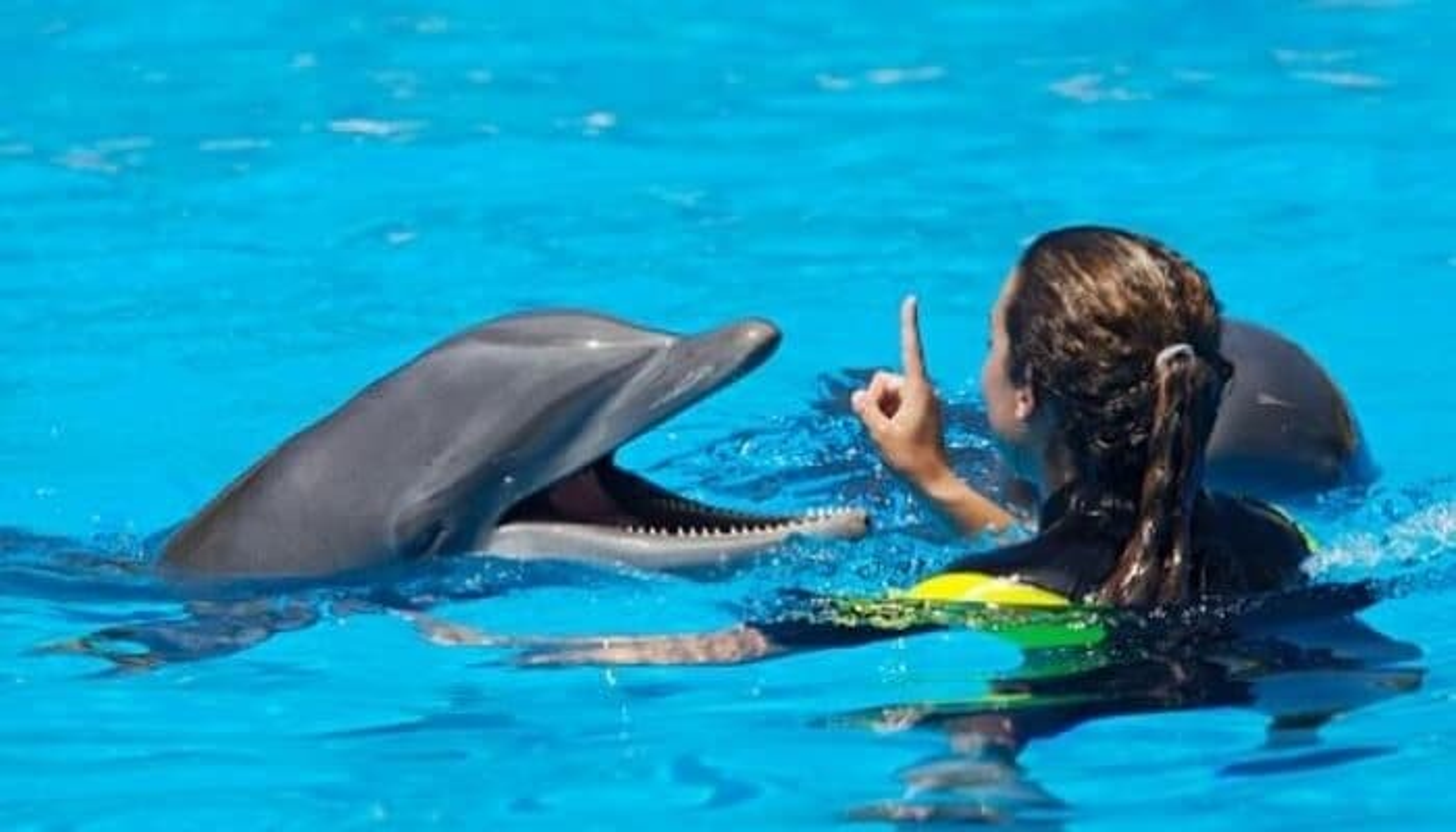 Nagez avec les dauphins et allez au parc aquatique Aquaventure à Dubaï