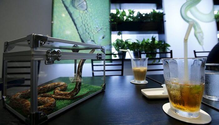 le snake caf tokyo un bar serpents pour prendre son caf. Black Bedroom Furniture Sets. Home Design Ideas