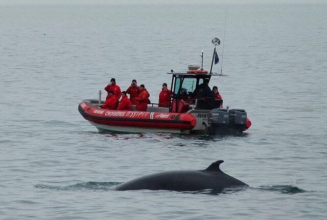Baleine à proximité de Tadoussac, Québec