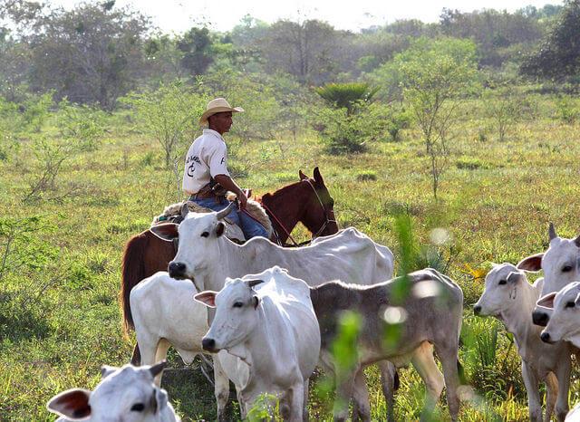 Cowboy, fazenda, Pantanal, Brésil