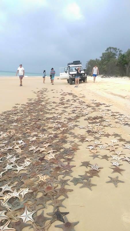 étoiles de mer échouées, Moreton Island, Australie