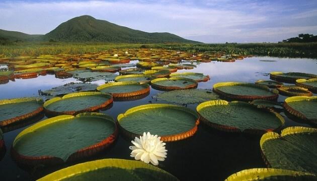 Le Pantanal au Brésil: le plus grand marais du monde