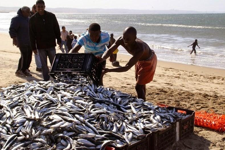 Sardine Run, Afrique du Sud