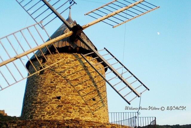 collioure-moulin