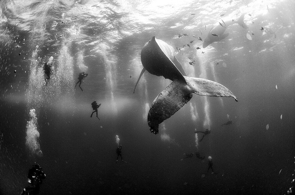 eau, baleines, world press, photo