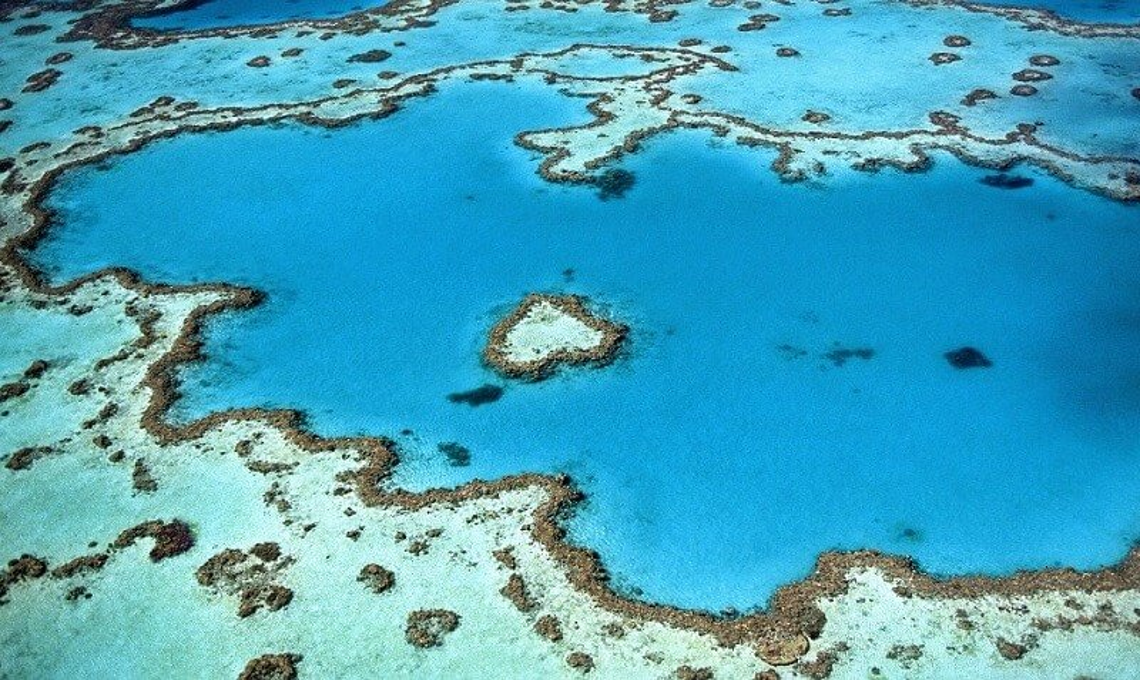 Heart Reef, Corail, Australie