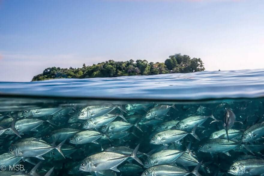 over-under-water-photography-3