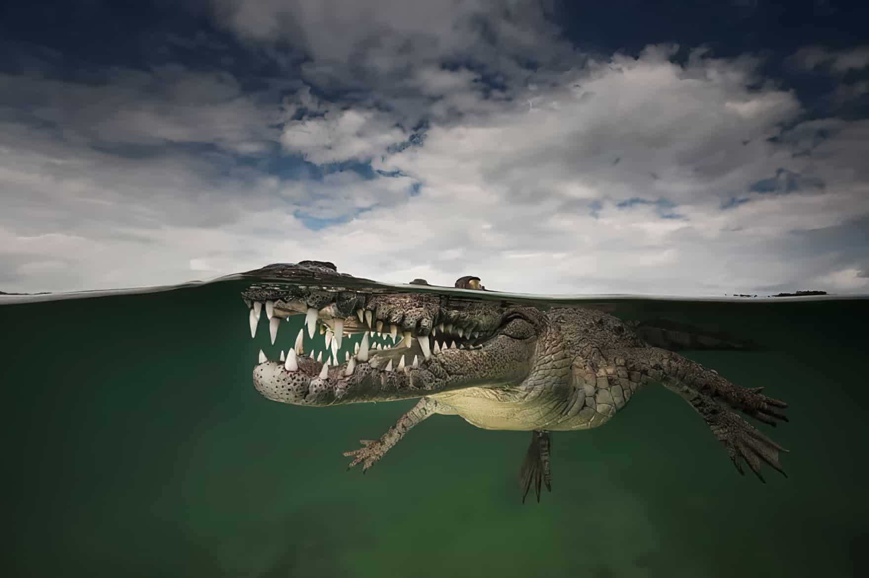 30 magnifiques photos prises entre deux mondes