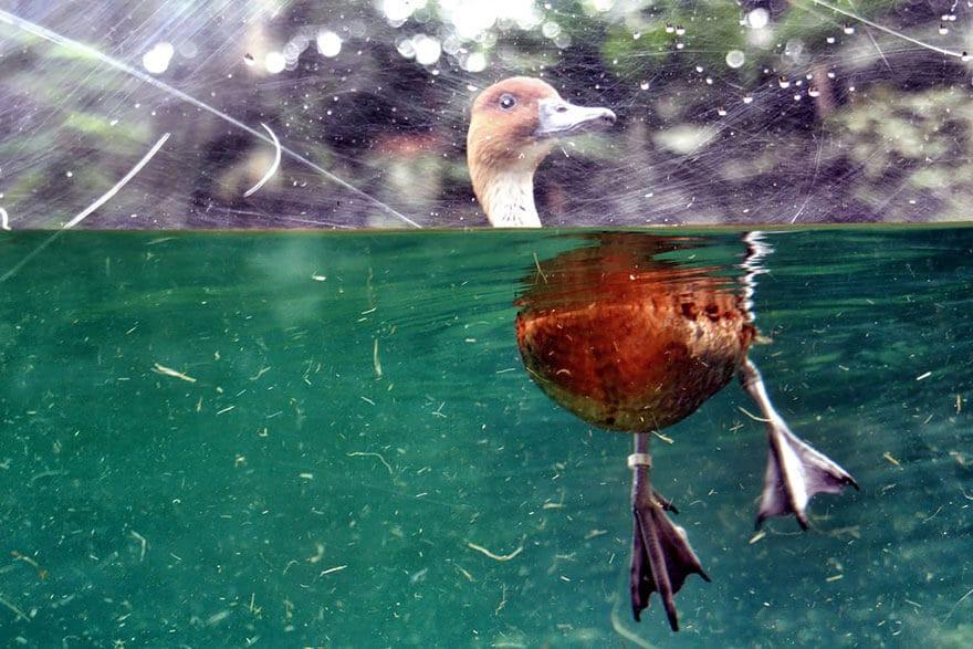 over-underwater-photography-2