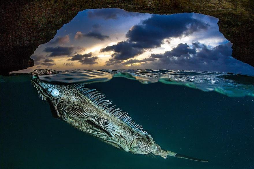 over-underwater-photography-4__880
