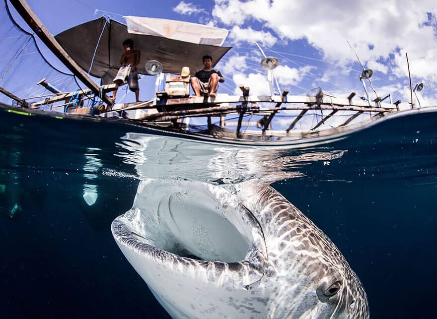 over-underwater-photography-5