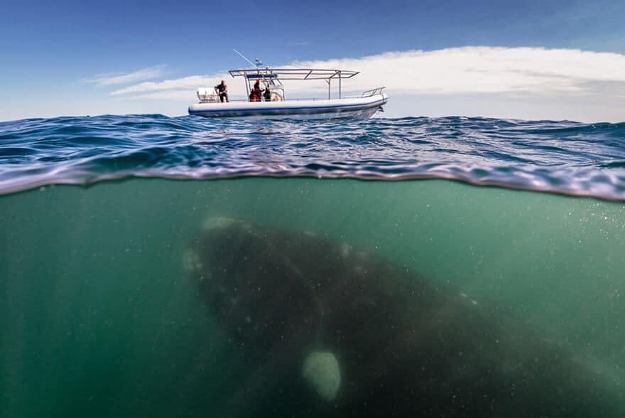 over-underwater-photography-8