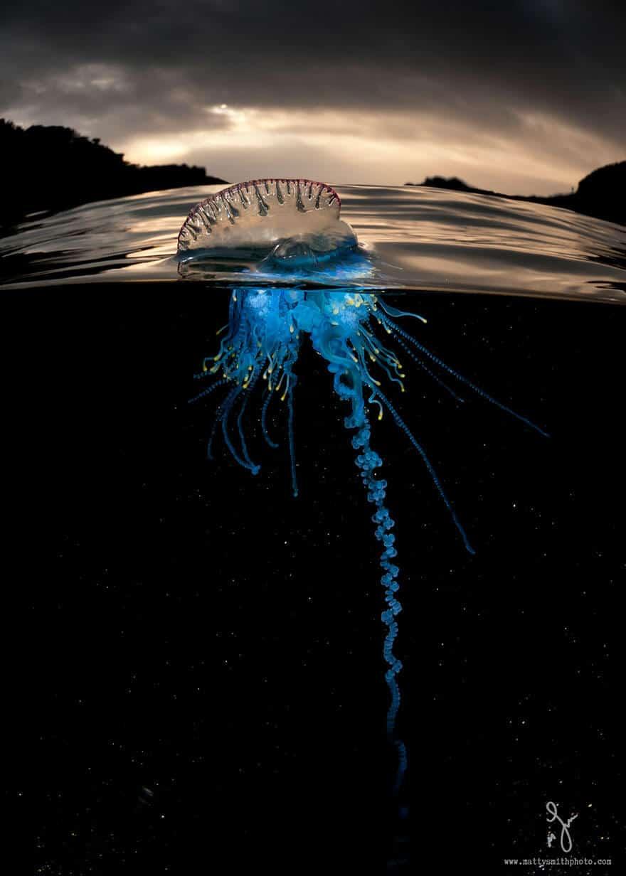 over-underwater-photography