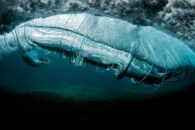 Ray Collins, Sous l'eau