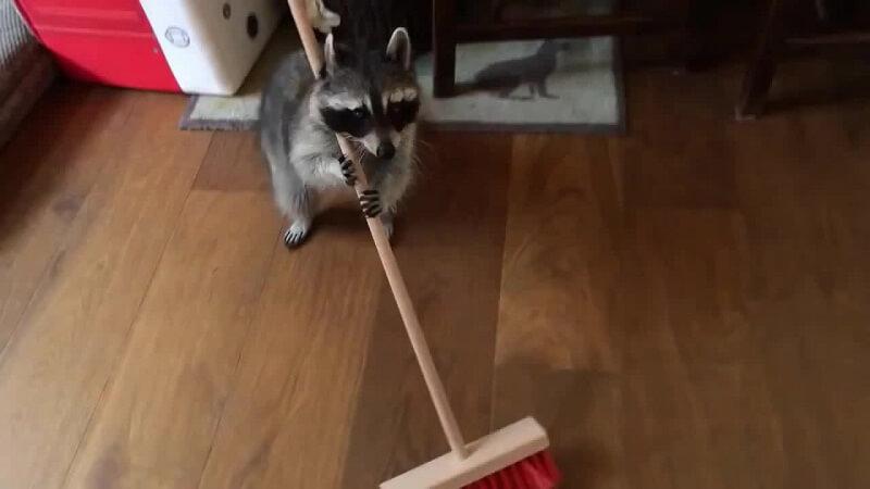Vidéos drôles d'animaux