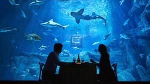 Airbnb, une nuit dans l'aquarium de Paris avec requins