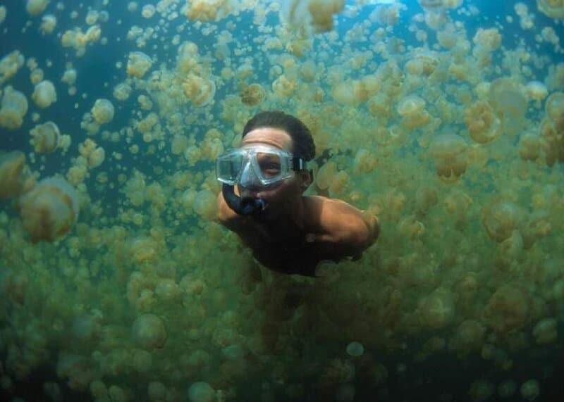 Plongeur dans le lac aux méduses, Palaos