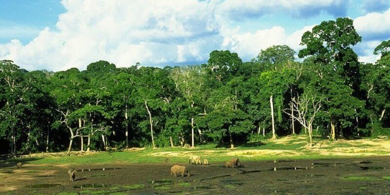Parc national, Centre Afrique