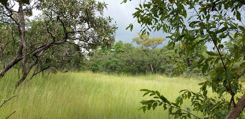 Parc national, Comoé