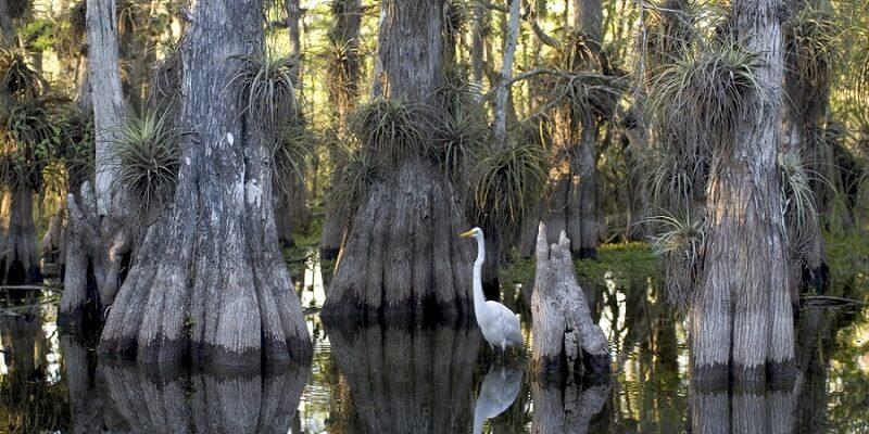 Parc National, Everglades